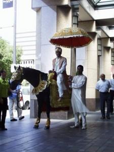 horse groom umbrella
